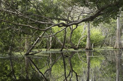 Orangewood Lakes Pond